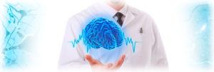 нервная система мозг11